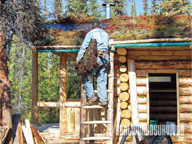 Log Building Process, Log Cabin, sod for roof