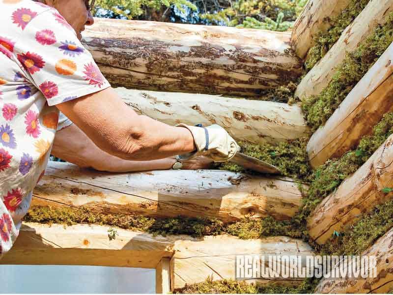 chinking walls, moss
