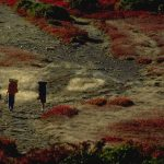 External Frame Packs, Dolly Sods Wilderness
