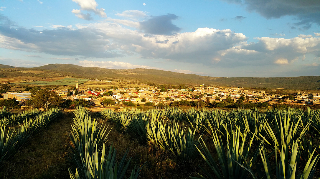 Tequila, agave plant, Mexico