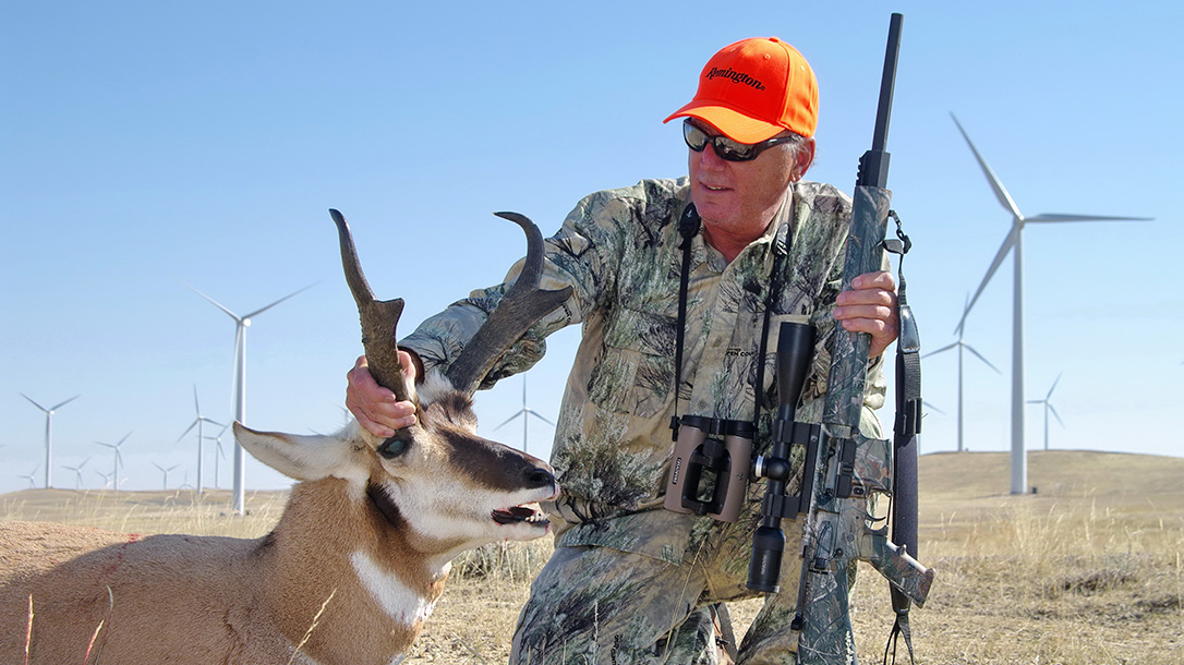 Western Pronghorn, antelope