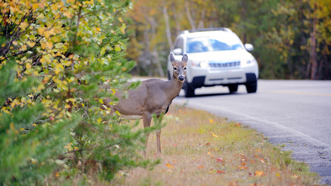 Eating Roadkill, Harvesting Roadkill, deer